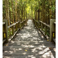 MANGROVE FOREST fotótapéta, poszter, vlies alapanyag, 225x250 cm