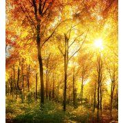 SUNY FOREST fotótapéta, poszter, vlies alapanyag, 225x250 cm