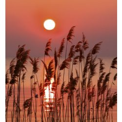 REED fotótapéta, poszter, vlies alapanyag, 225x250 cm