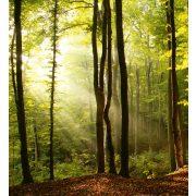 FOREST fotótapéta, poszter, vlies alapanyag, 225x250 cm