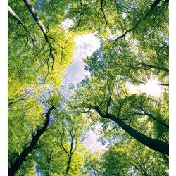 TREES fotótapéta, poszter, vlies alapanyag, 225x250 cm
