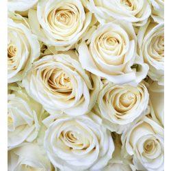 WHITE ROSES fotótapéta, poszter, vlies alapanyag, 225x250 cm