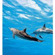 DOLPHINS fotótapéta, poszter, vlies alapanyag, 225x250 cm