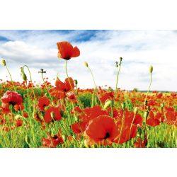 RED POPPIES fotótapéta, poszter, vlies alapanyag, 375x250 cm