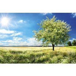 BLOSSOM TREE fotótapéta, poszter, vlies alapanyag, 375x250 cm