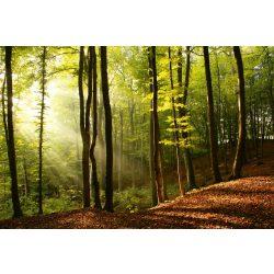 FOREST fotótapéta, poszter, vlies alapanyag, 375x250 cm