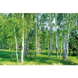 BIRCH GROW fotótapéta, poszter, vlies alapanyag, 375x250 cm