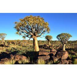 NAMIBIA fotótapéta, poszter, vlies alapanyag, 375x250 cm