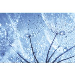DANDELION WATER DROPS fotótapéta, poszter, vlies alapanyag, 375x250 cm