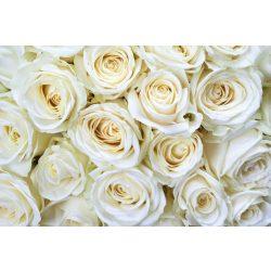 WHITE ROSES fotótapéta, poszter, vlies alapanyag, 375x250 cm