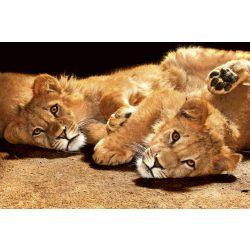 YOUNG LIONS fotótapéta, poszter, vlies alapanyag, 375x250 cm