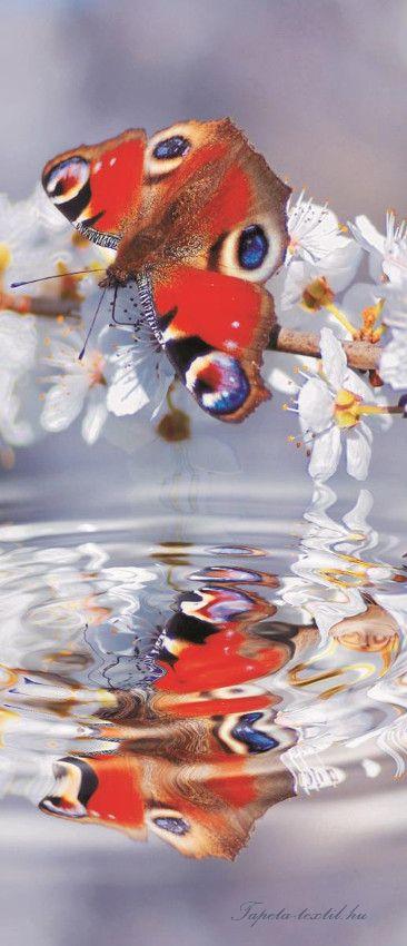 Pillangó vlies poszter, fotótapéta 013VET /91x211 cm/