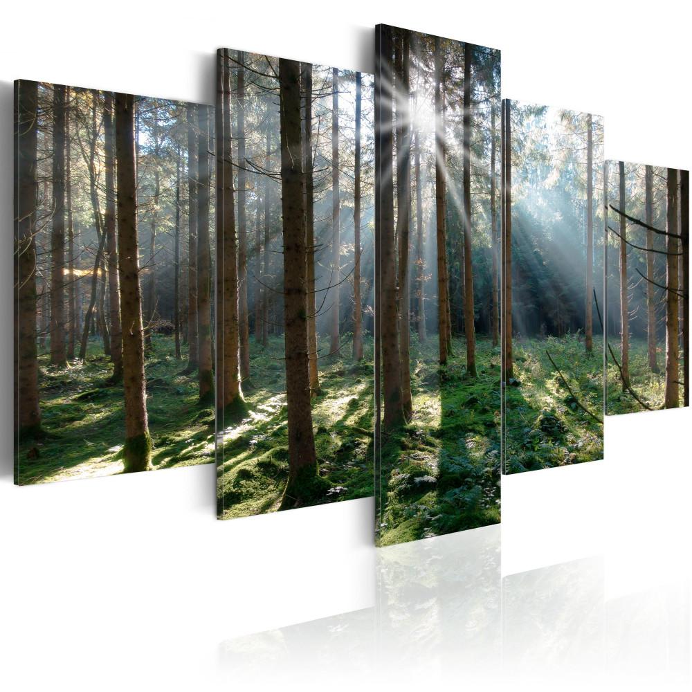 Kép - Fairytale Forest