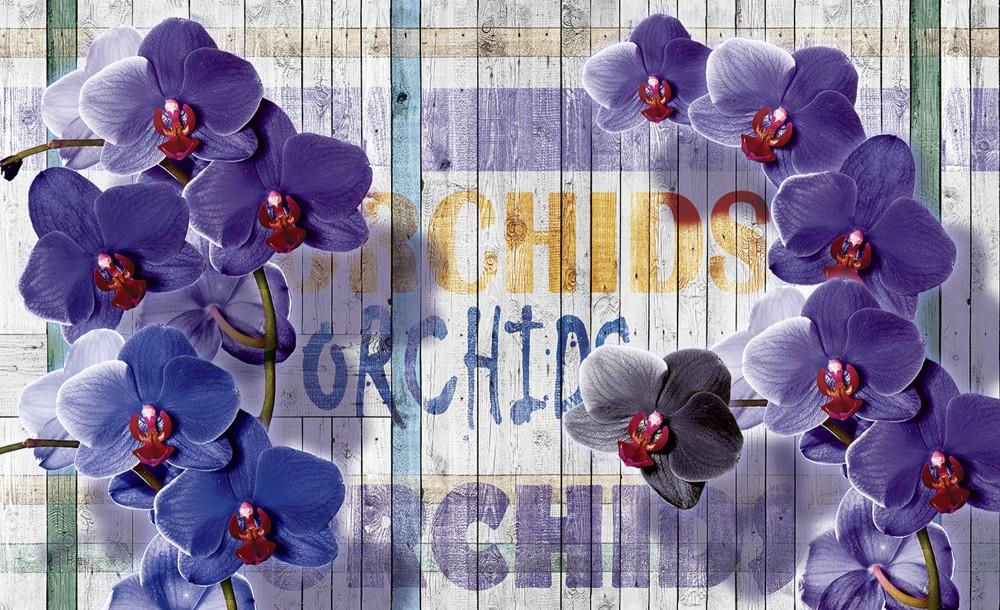 Lila orchidea poszter, fotótapéta (256 x 184 cm)
