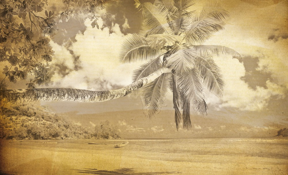 Tengerparti anzix poszter, fotótapéta (368 x 254 cm)