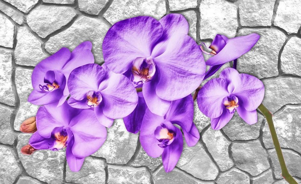 Orchidea 1606 több méretben, alapanyagban