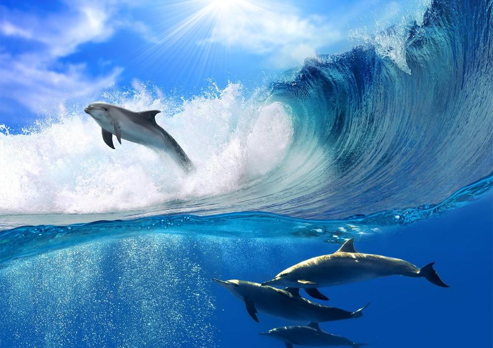Delfinek 188 több méretben, alapanyagban