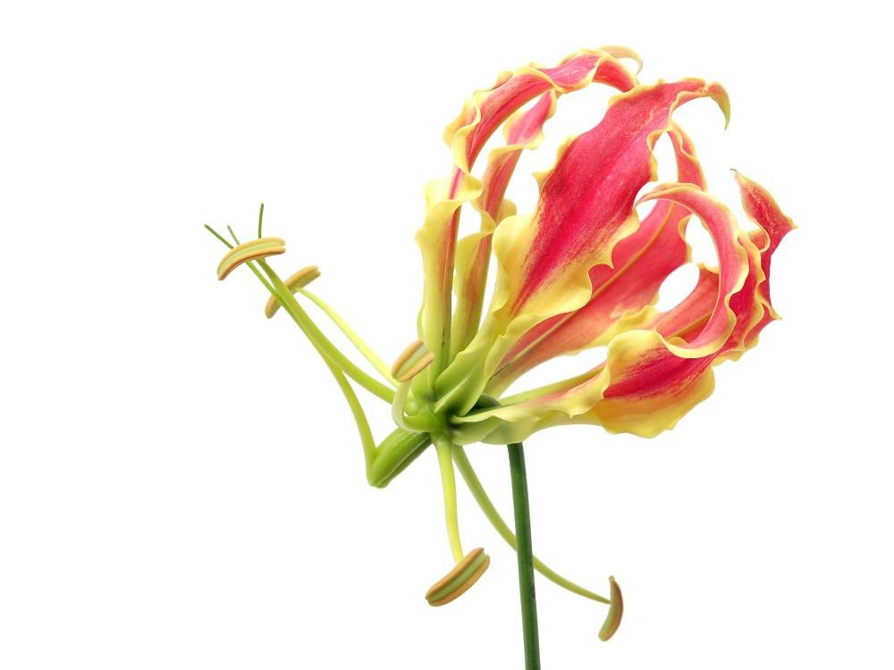 Virág 194 több méretben, alapanyagban