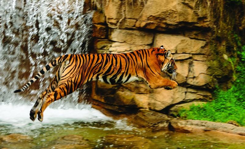 Tigris 1963 több méretben, alapanyagban