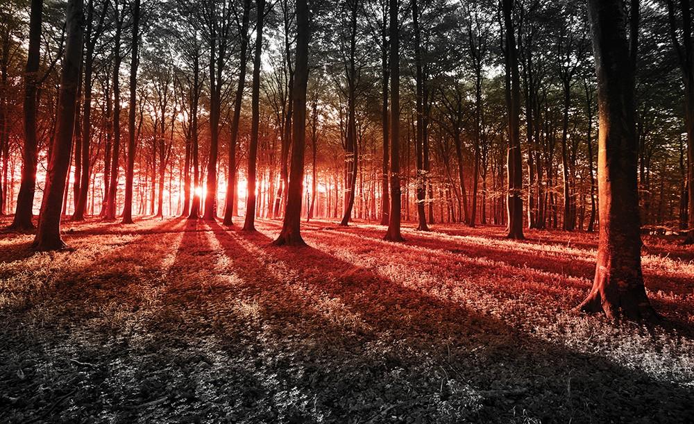 Erdő poszter, fotótapéta 2227 több méretben, alapanyagban
