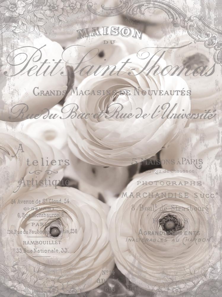 Rózsák poszter, fotótapéta, Vlies (206x275 cm, álló)