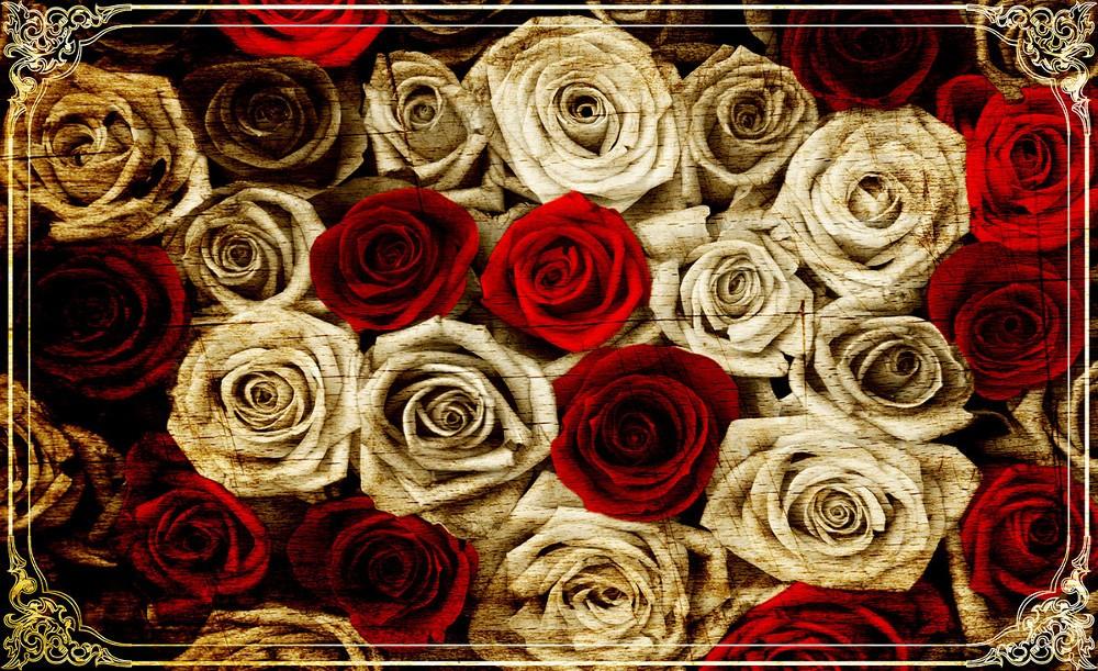 Rózsák poszter, fotótapéta, Vlies (104 x 70,5 cm)
